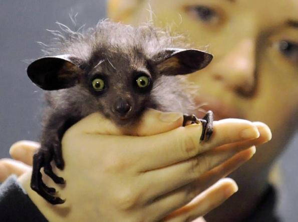 10 самых страшных животных мира