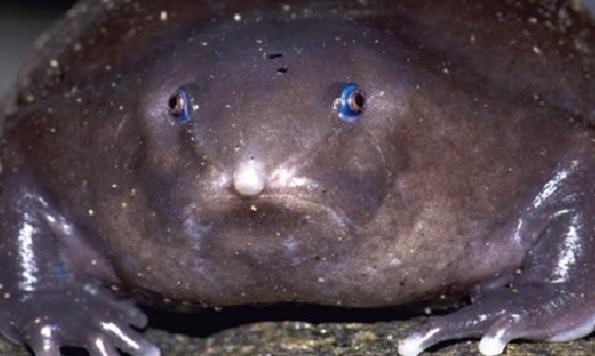 земляной лягушки – пурпурную