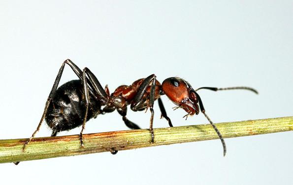 Самые древние насекомые