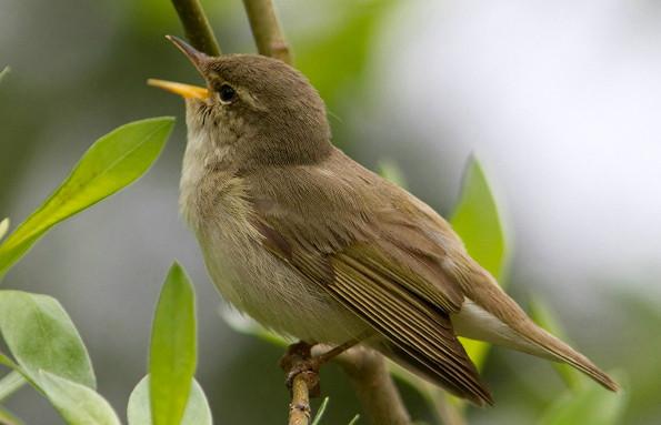 Самые маленькие птицы России