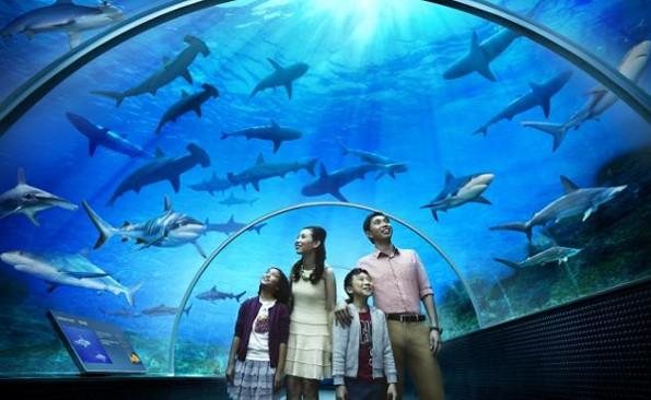 Самые большие в мире аквариумы