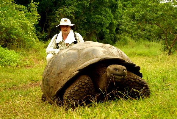 Самая большая черепаха