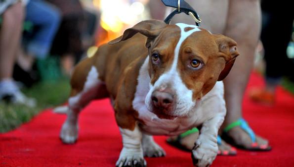 Самые уродливые собаки в мире