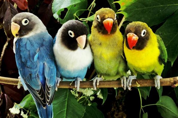 самый смешной попугай