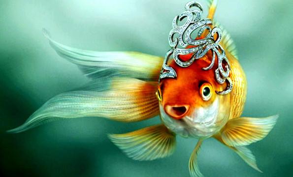 Самые известные рыбы