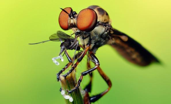 Такие самые опасные насекомые в мире