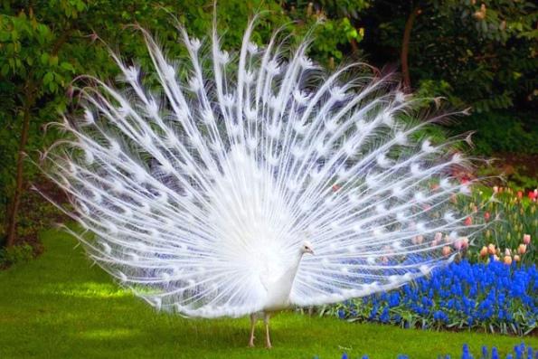 Самые необычные птицы мира