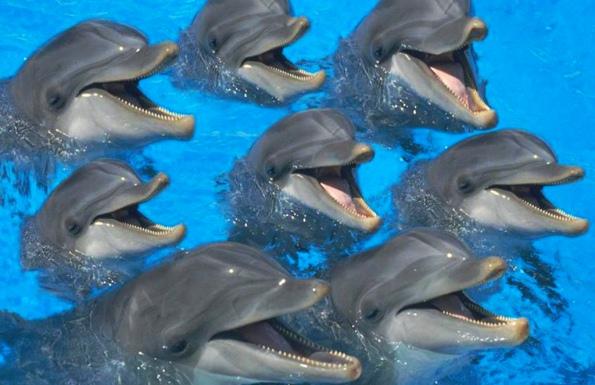 стадо дельфинов