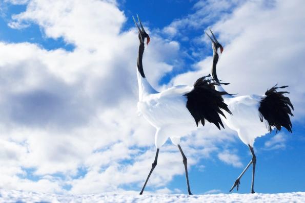 Самые высокие птицы в России
