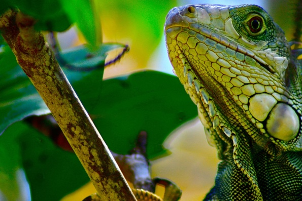 Самые-самые Рептилии