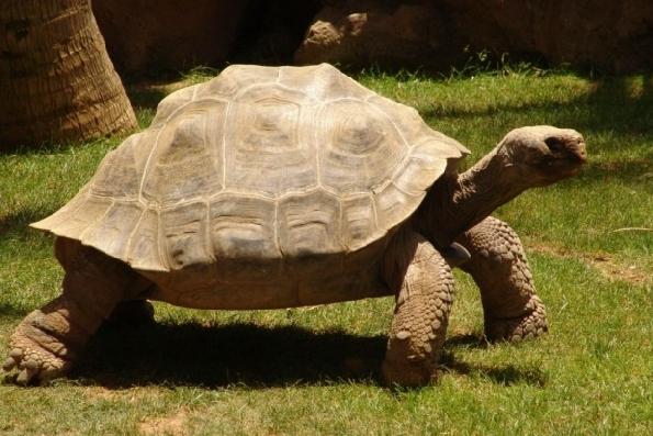 Самая старая черепаха