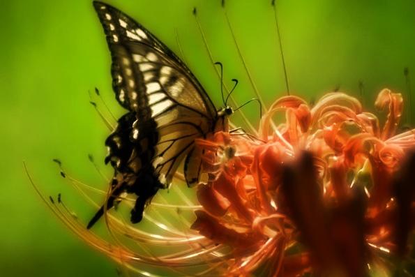 Самое интересное о бабочках