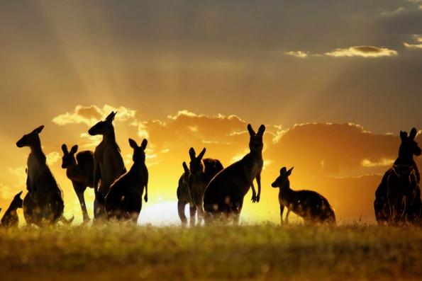 Экзотические животные Австралии