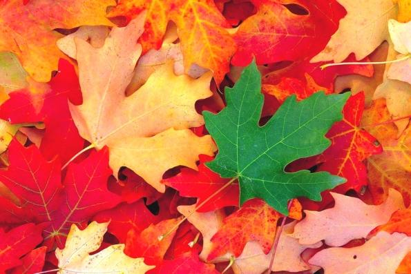 О листьях