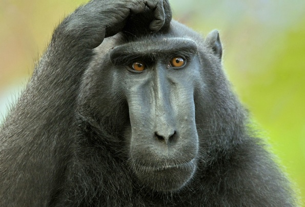 обезьяны-интересные факты