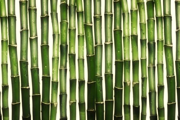Самое быстрорастущее растение в мире