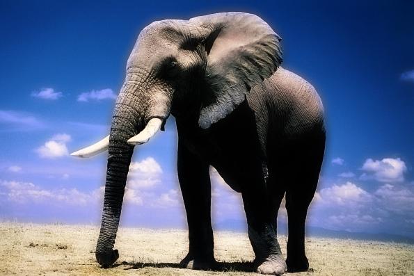 Символом чего является слон
