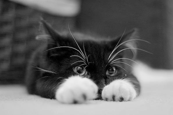 Зачем нужна кошка в доме