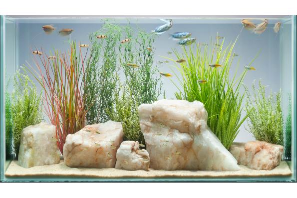 Рыбки, которые чистят аквариум
