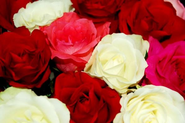 Символом чего является роза