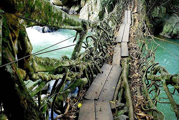 cherrapunji-tree-root-bridges-012