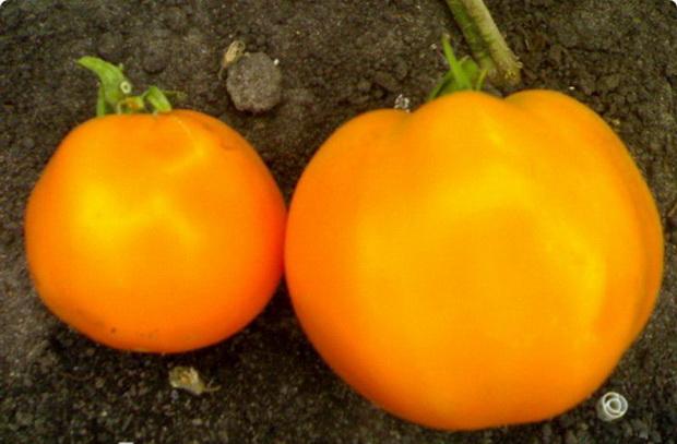 оранжевый сорт