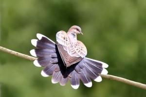 интересные факты о голубях