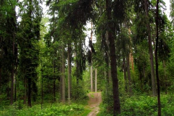 О животных леса