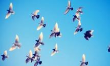Самые многочисленные птицы