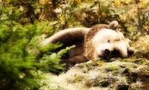 Какие животные спят больше всех