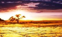 Самые-самые животные Африки!