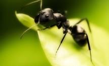 Самое интересное о муравьях