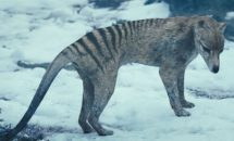 интересные акты о сумчатом волке