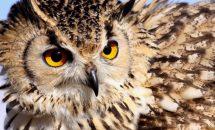 Почему сова символ мудрости?