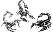 о скорпионах