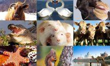 О поведении животных