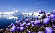 Об Арктике