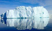 О животных антарктиды