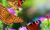 Символом чего является бабочка